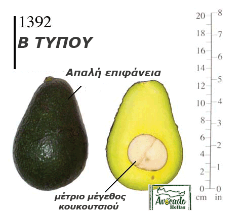 Αβοκάντο Κρήτης 1392 (Avocado 1392)