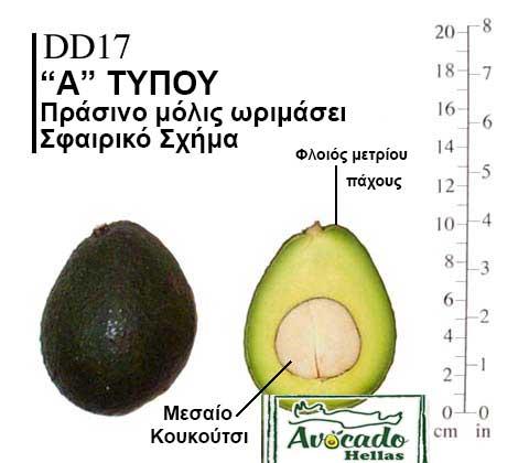 Ποικιλία Αβοκάντο (Avocado) DD17