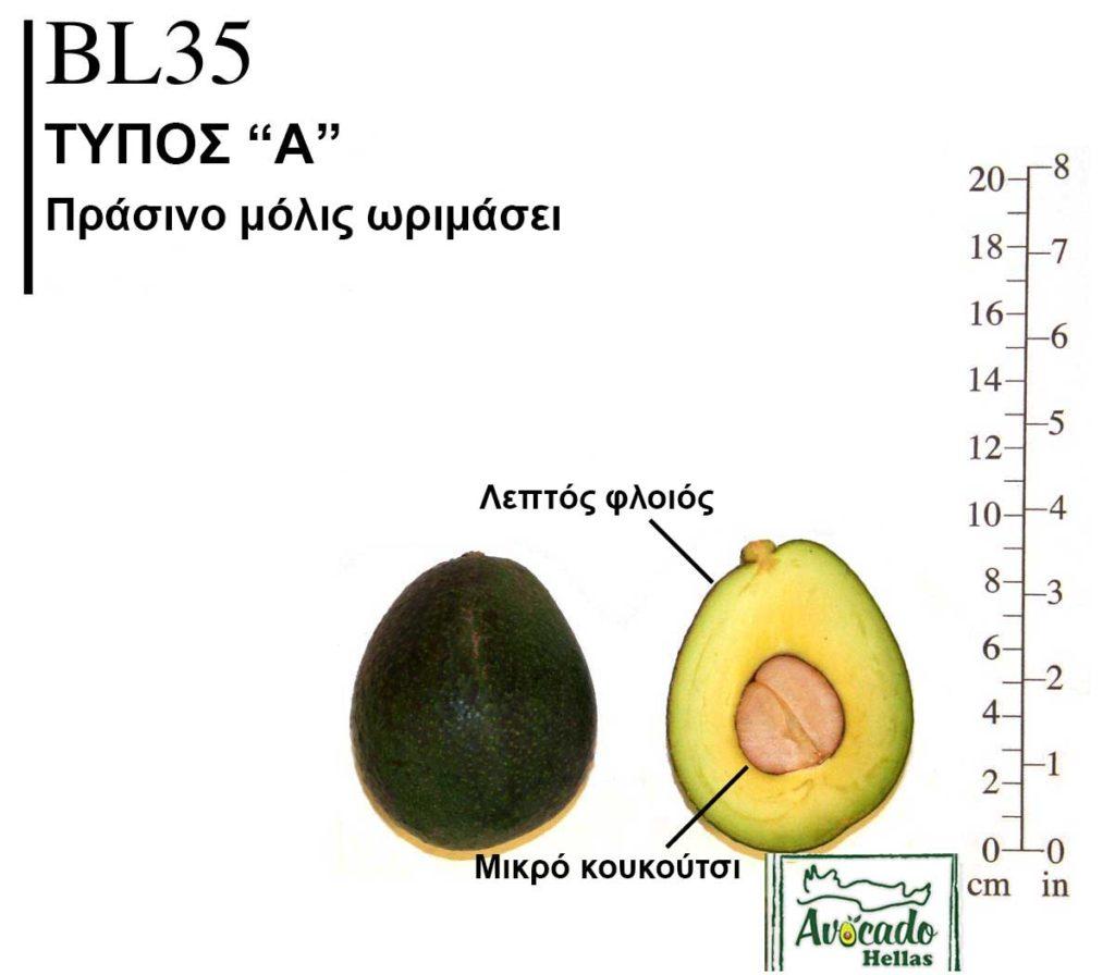 Ποικιλία Αβοκάντο (Avocado) BL35