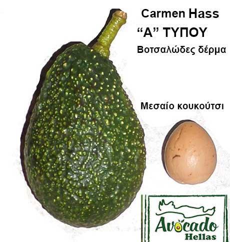 Ποικιλία αβοκάντο Κρήτης CarmenHass, Ποικιλία Αβοκάντο (Avogado) Carmen Hass, Avocado-Crete