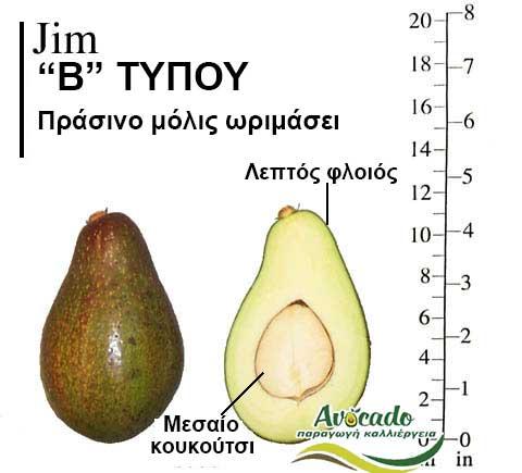 Ποικιλία Αβοκάντο Κρήτης Jim-chania, Ποικιλία Αβοκάντο Jim (Δημοφιλές), Avocado-Crete