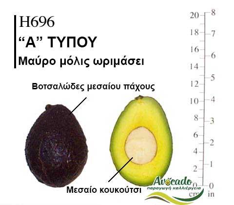 Ποικιλία Αβοκάντο Κρήτης Η696, Ποικιλία Αβοκάντο (Avocado) Η696, Αβοκάντο φυτά αγορά
