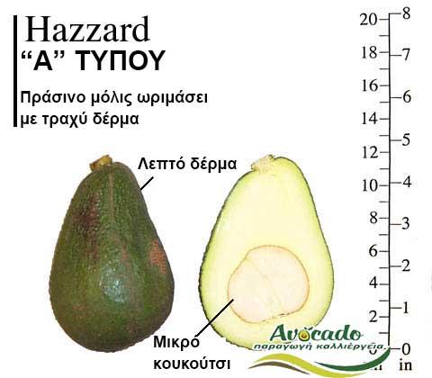 Ποικιλία Αβοκάντο Κρήτης Ηazzard, Ποικιλία Αβοκάντο (Avocado) Hazzard, Avocado-Crete