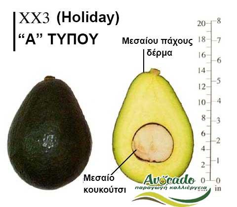 Ποικιλία Αβοκάντο Κρήτης Holiday, Ποικιλία Αβοκάντο (Avocado) XX3 Holiday, Avocado-Crete